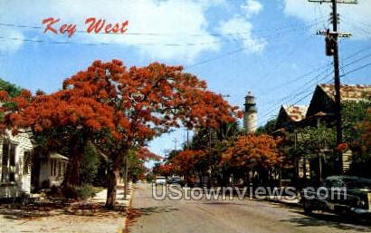 Royal Poinciana Tree - Key West, Florida FL Postcard