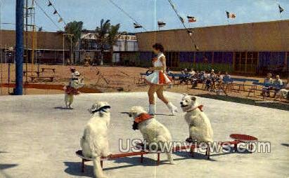 Circus Dogs - Sarasota, Florida FL Postcard