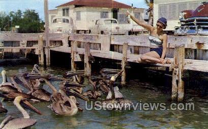 Pelicans - Florida Keys Postcards, Florida FL Postcard
