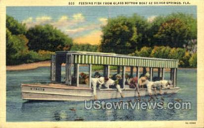 Feeding Fish - Silver Springs, Florida FL Postcard