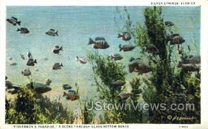 Fishermen's Paradise - Silver Springs, Florida FL Postcard