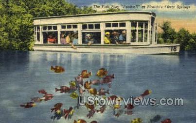 Fish Play - Silver Springs, Florida FL Postcard