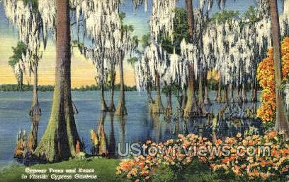 Trees & Knees - Cypress Gardens, Florida FL Postcard
