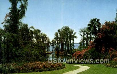 Vegetation - Cypress Gardens, Florida FL Postcard