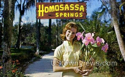 Homosassa Springs - St Petersburg, Florida FL Postcard