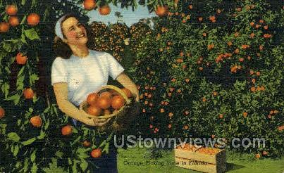 Orange Picking - Cypress Gardens, Florida FL Postcard