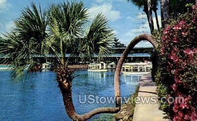 Horse Shoe Palm - Silver Springs, Florida FL Postcard