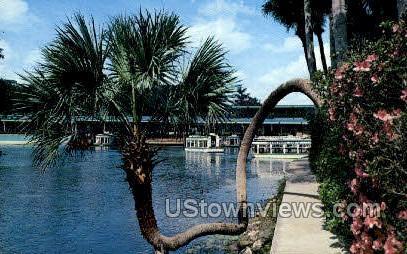 Lucky Palm - Silver Springs, Florida FL Postcard