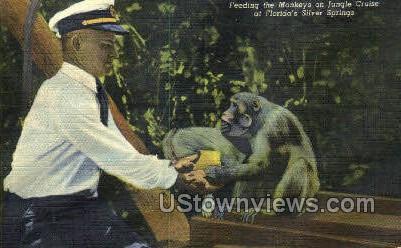Monkeys - Silver Springs, Florida FL Postcard