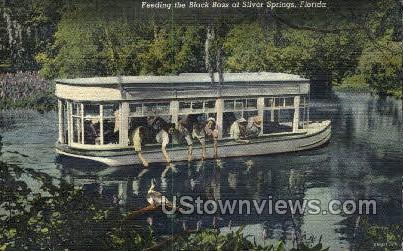 Black Bass - Silver Springs, Florida FL Postcard