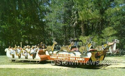 Sleigh-Riding - Silver Springs, Florida FL Postcard
