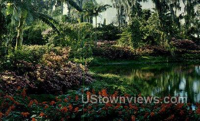 Red Salvia - Cypress Gardens, Florida FL Postcard