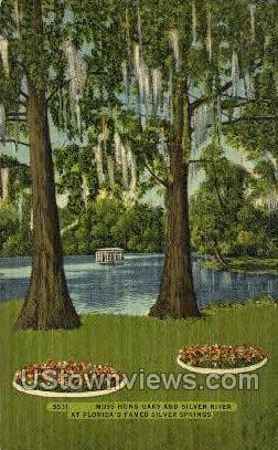 Moss Hung Oaks - Silver Springs, Florida FL Postcard