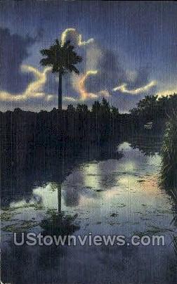 Lone Sentinel - Everglades, Florida FL Postcard