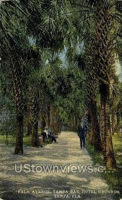 Palm Ave - Tampa, Florida FL Postcard