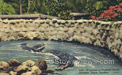 Alligators - Sarasota Jungle Gardens, Florida FL Postcard