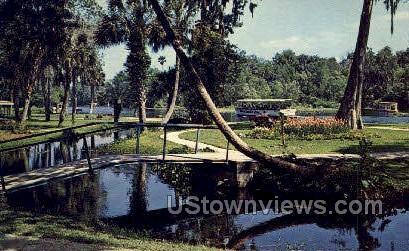 Park - Silver Springs, Florida FL Postcard