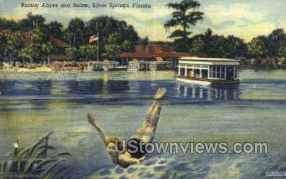 Beauty - Silver Springs, Florida FL Postcard