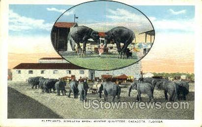 Elephants, Ringling Bros - Sarasota, Florida FL Postcard