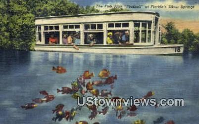 Fish Play Football - Silver Springs, Florida FL Postcard