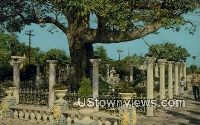 Famous Kapok Tree - Clearwater, Florida FL Postcard