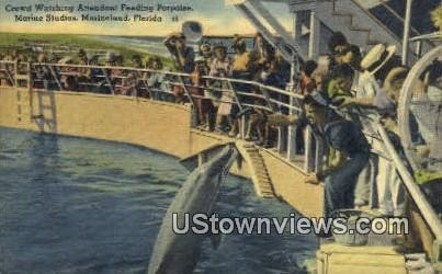 Feeding Porpoise, Marine Studios - Marineland, Florida FL Postcard