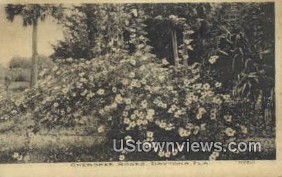 Cherokee Roses - Daytona, Florida FL Postcard