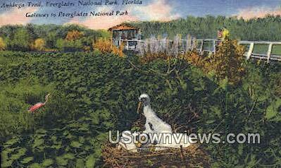 Anhinga Trail - Everglades National Park, Florida FL Postcard