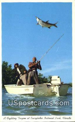 Fighting Tarpon - Everglades National Park, Florida FL Postcard