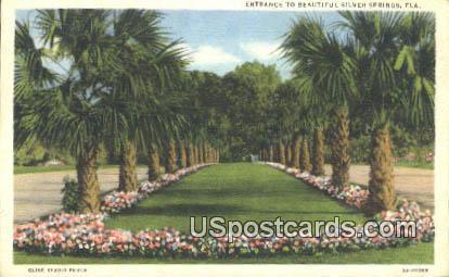 Silver Springs, FL Postcard     ;     Silver Springs, Florida