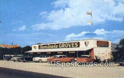 Seminole Groves - Clearwater, Florida FL Postcard