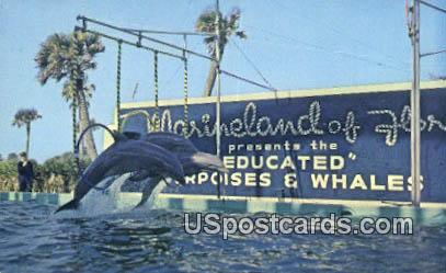 Porpoises - Marineland, Florida FL Postcard