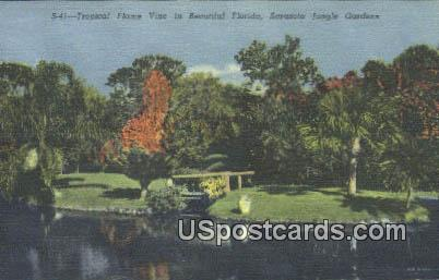 Tropical Flame Vine - Sarasota Jungle Gardens, Florida FL Postcard