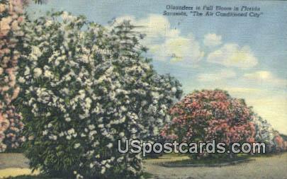 Sarasota, FL Postcard     ;     Sarasota, Florida