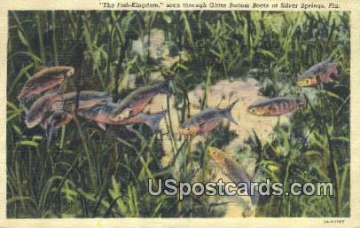 Fish Kingdom, Glass Bottom Boats - Silver Springs, Florida FL Postcard