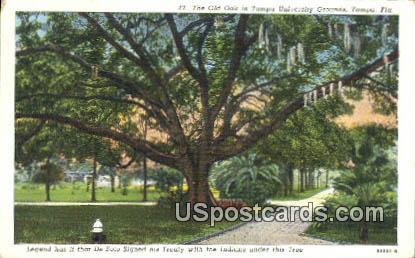 Tampa University Grounds - Florida FL Postcard