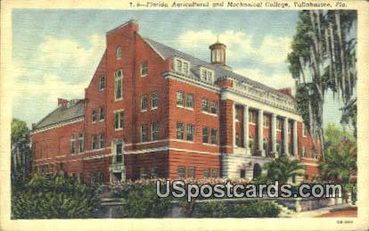 Florida Agricultural & Mechanical College - Tallahassee Postcard