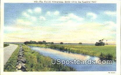 Tamiami Trail - Everglades, Florida FL Postcard