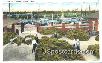 Sponges - Tarpon Springs, Florida FL Postcard
