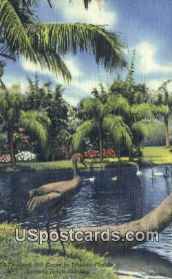 Sand Hill Crane, Sarasota Jungle Gardens - Florida FL Postcard