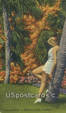 Sarasota Jungle Gardens, FL Postcard     ;     Sarasota Jungle Gardens, Florida