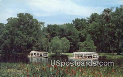 Florida's Silver Springs Postcard