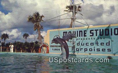 Trained Porpoises, Marine Studios - Marineland, Florida FL Postcard