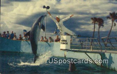 Porpoise - Marineland, Florida FL Postcard