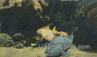 7ton Coral Reef, Marine Studios - Marineland, Florida FL Postcard