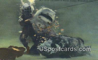 Diver & Shark, Marine Studios - Marineland, Florida FL Postcard