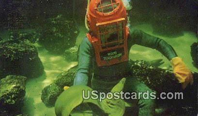 Scuba Diving, Greey Moray Eel - Miami Seaquarium, Florida FL Postcard