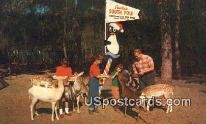 Tommy Bartlett - Silver Springs, Florida FL Postcard