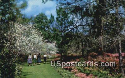 Killearn Gardens State Park - Tallahassee, Florida FL Postcard