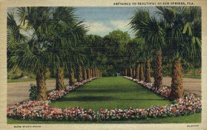 Entrance - Silver Springs, Florida FL Postcard